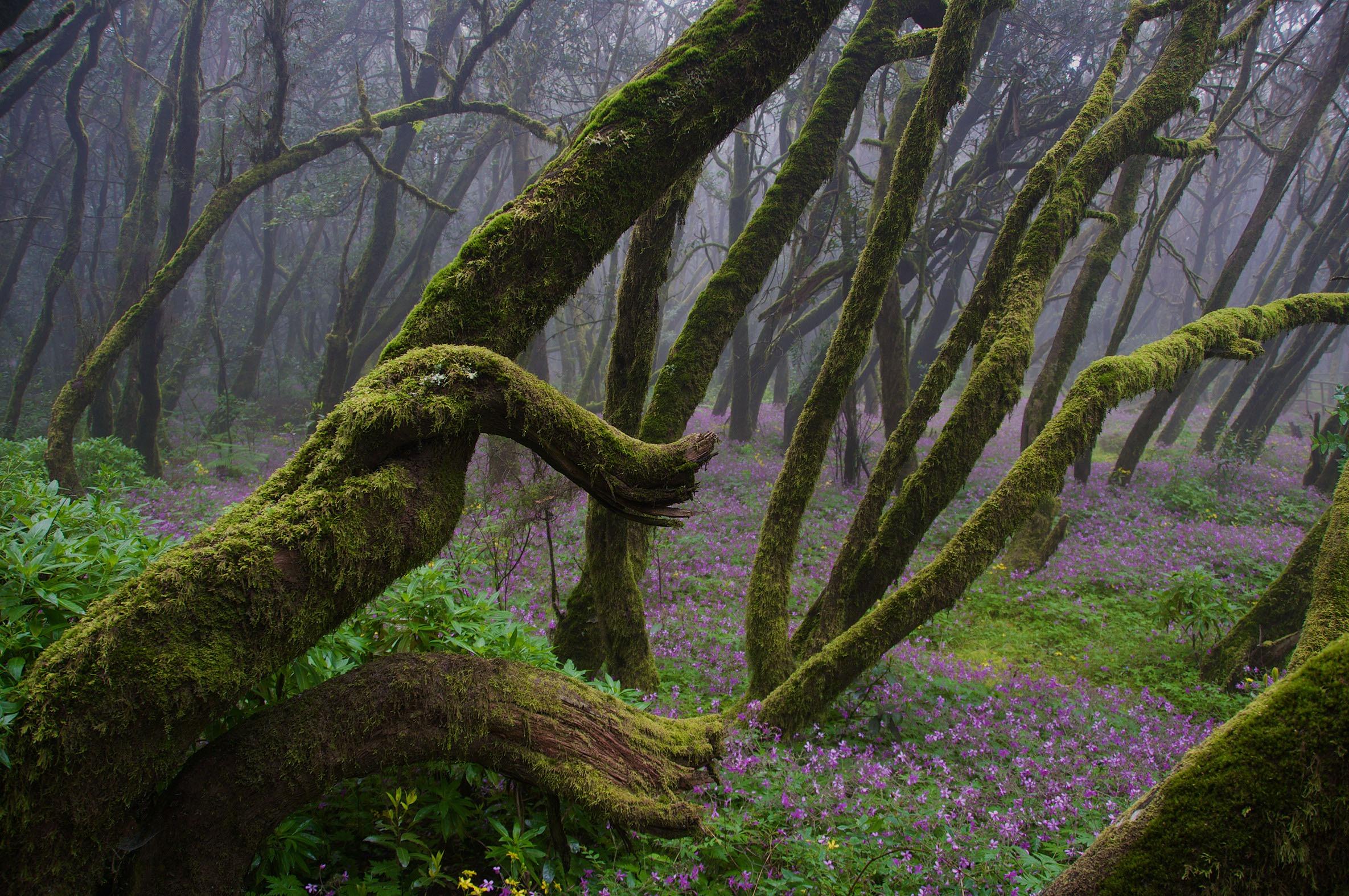 "★ ""La Gomera Woods"", La Gomera"